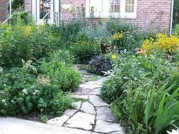perennial lawn