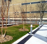 Birches 2012