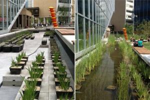 Water Garden 2012 and 2013