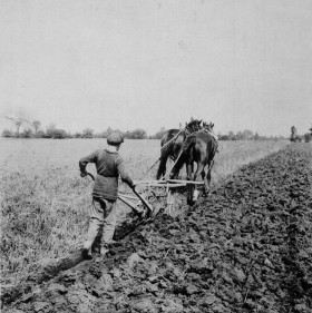 Barnardo Boy works the plow near Russell, Manitoba