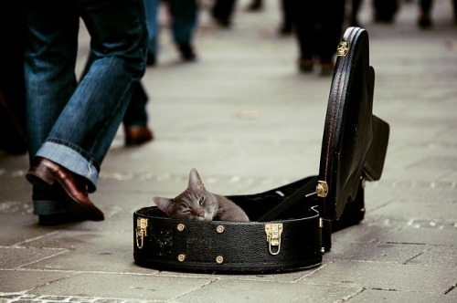 kitty-guitarcase_640